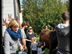 pippowagen uitleg over ezels